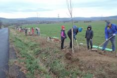 Výsadba ovocných stromů Háje 17.11. 2015