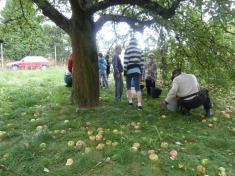 Sbírání jablíček ZŠ Řenče