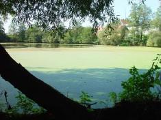 rybník Vodokrty vroce 2006